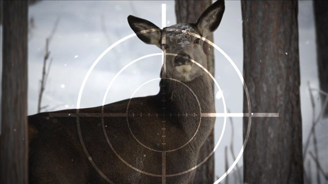 More deer, younger hunters expected for Wisconsin gun season
