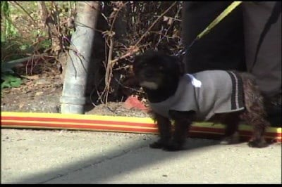 Dog Rescued and No Injuries in Binghamton Fire - FOX 40 WICZ