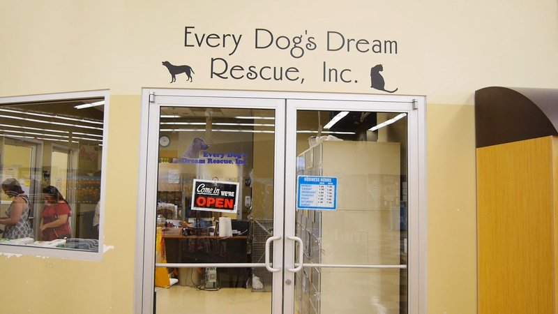grrrage sale to raise money for every dog s dream rescue fox 40