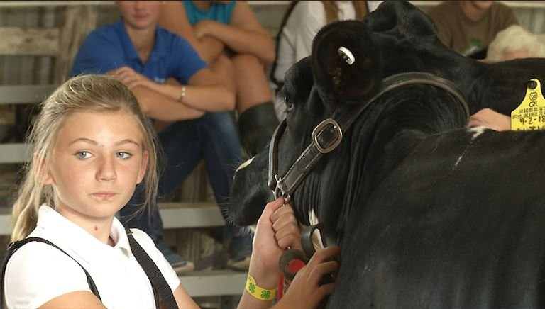 Dairy Day at the Tioga County Fair - FOX 40 WICZ TV - News, Sports